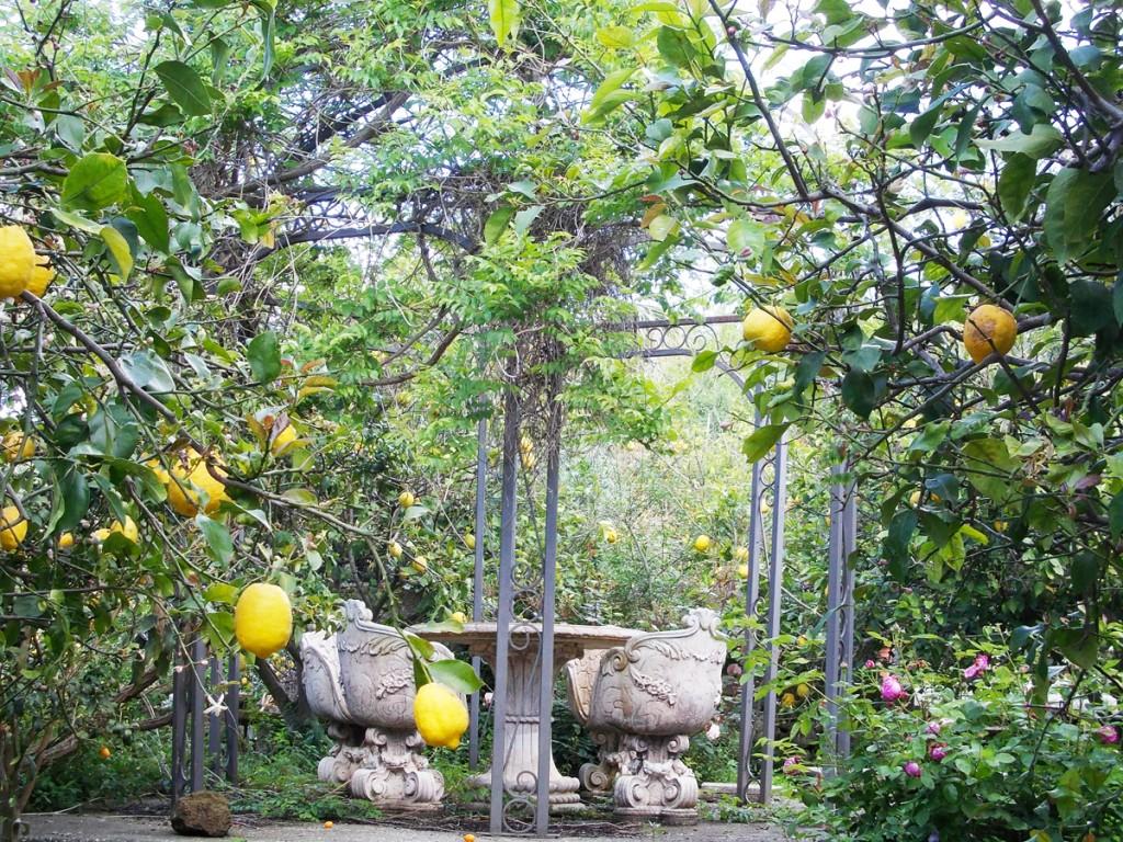 limoneto-cai-2014-campagnano-103