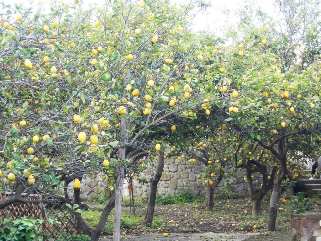 limoneto-cai-2014-campagnano-110