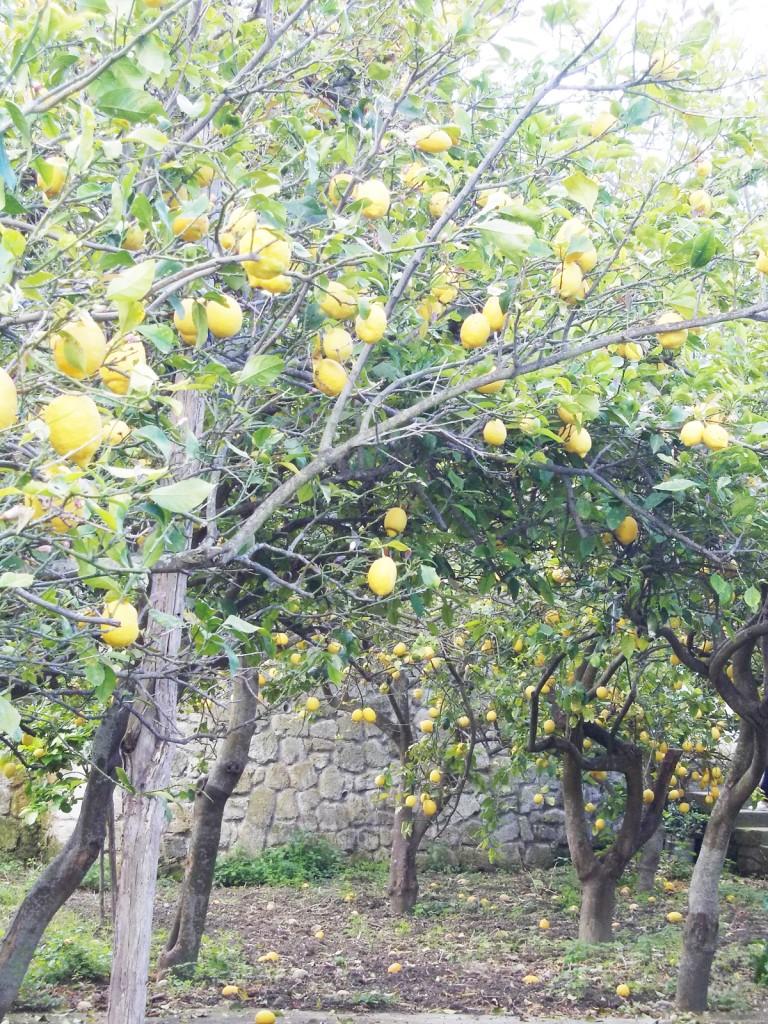 limoneto-cai-2014-campagnano-113