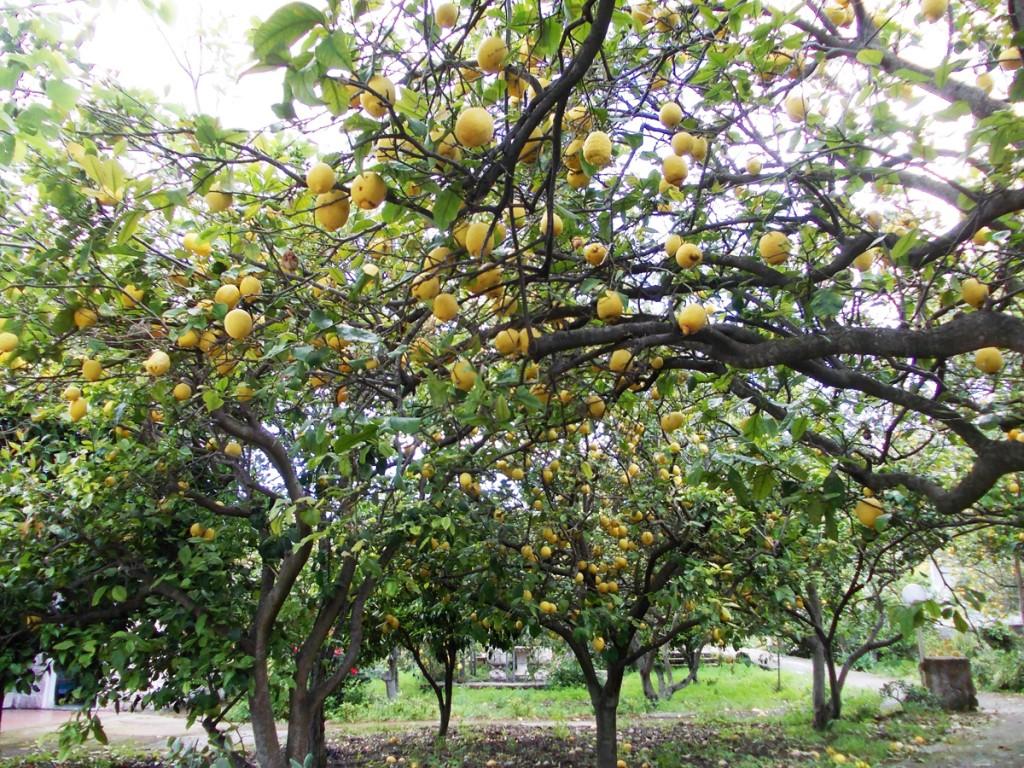 limoneto-cai-2014-campagnano-130